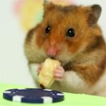 Eetwedstrijd hamster