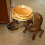 Hondenkop met snacks