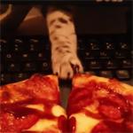 Katten en pizza