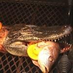 Leg een krokodil op de grill
