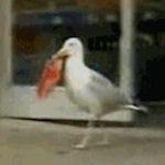 Vogel pikt zakje chips