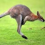 kangoeroe burger